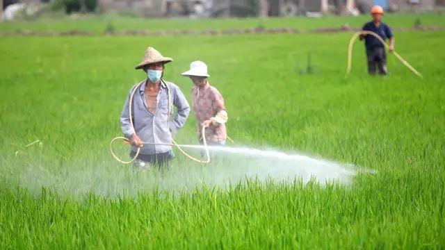 河北省推广化肥减量增效 践行可持续农业